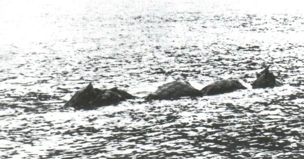 Фотография, сделанная Т. Динсдейлом в 1960 году во время аэрофотосъемок озера