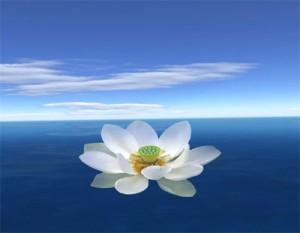 Цветок лотоса - один из символов буддизма