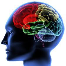 мозг человека содержит мириады нервных клеток