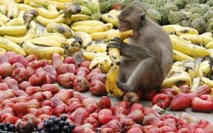 primaty_frukty