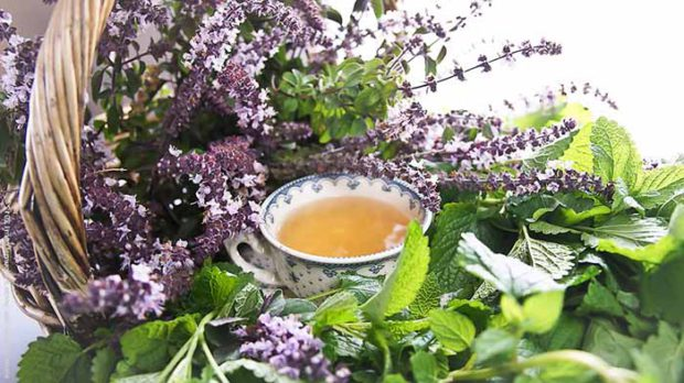 применение растений для успокоения